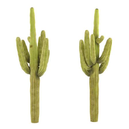 Plant isolated. Carnegiea gigantea cactus