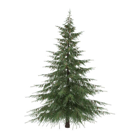 picea: Tree isolated. Picea fir-tree isolated at the white background Stock Photo