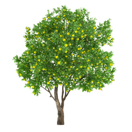 arbol: Aislado �rbol de fruta c�trica fruta. lim�n