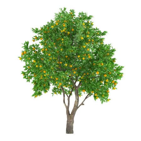 Citrusvruchten boom geïsoleerd. citroen