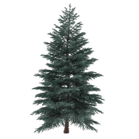 pinus sylvestris: Tree isolated. Pinus sylvestris isolated at the white background