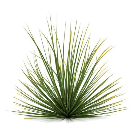 Plant bush isolated. Agave stricta Banco de Imagens - 24755322