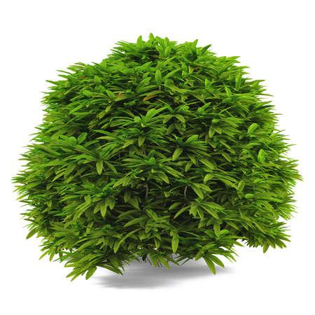 Exotic bush isolated