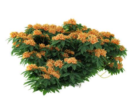 Plant flower bush isolated. Banco de Imagens - 24756656