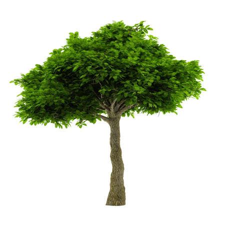 Exotic tree isolated. Banco de Imagens - 24756686