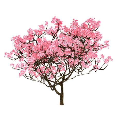 벚꽃 나무는 고립