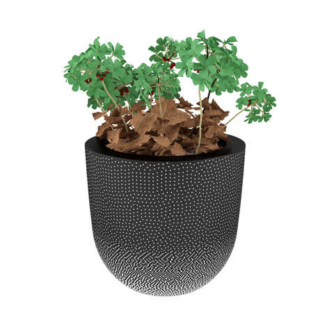 plant pot: Plant in the pot