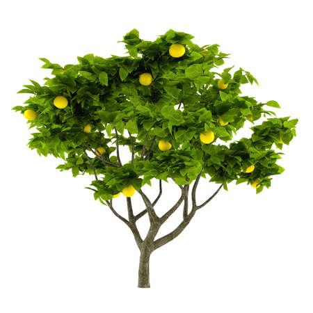 Citrus lemon tree isolated photo