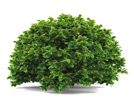 Plant bush isolated. Banco de Imagens - 24767834