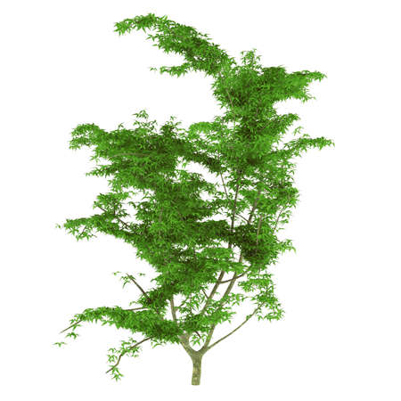 Young tree isolated photo