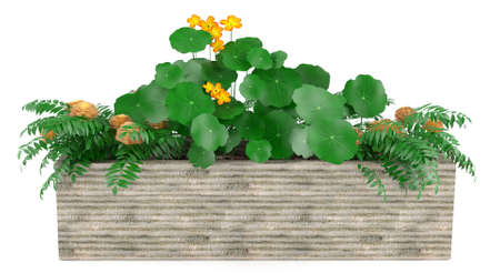Window flowers in the box