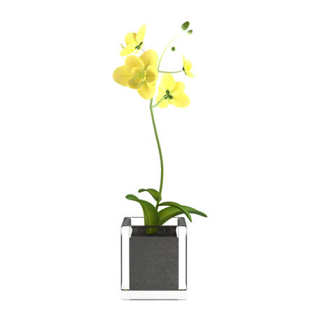 Orchid yellow flower in the pot photo