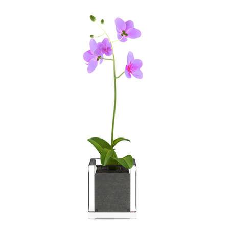 Flor de la orqu�dea violeta en la olla en el fondo blanco photo