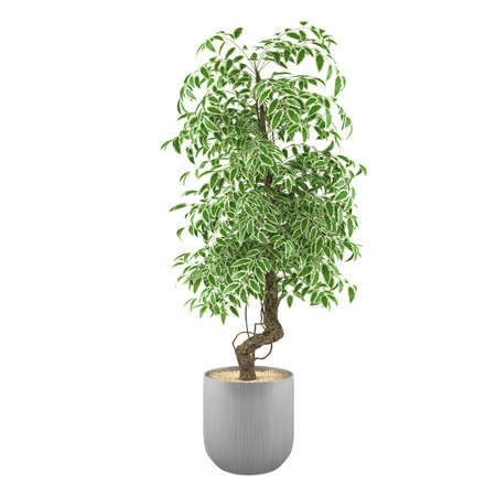 Plant in the pot at the white background