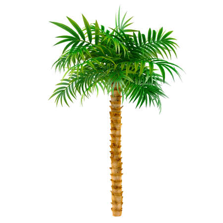 decorative palm at the white background photo