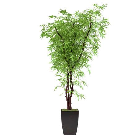 plant bush in the pot at the white background Banco de Imagens - 24703869