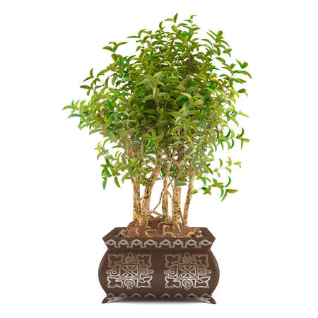 tree bush in the pot isolated at the white background photo