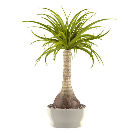 Decorative palm plant in the pot at the white background Banco de Imagens - 24710498