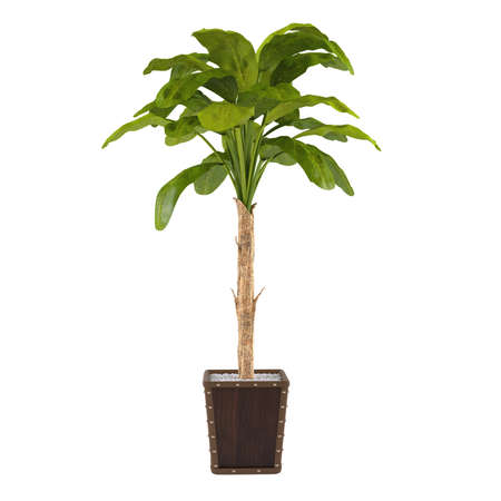 indoors: Decorative palm plant in the pot at the white background