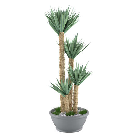 Decorative palm plant in the pot at the white background photo