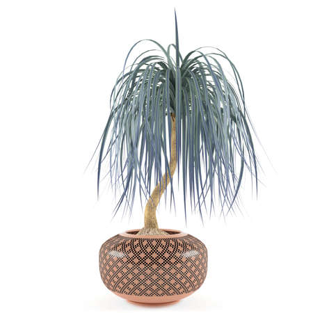 indoor garden: decorative palm in the pot at the white background