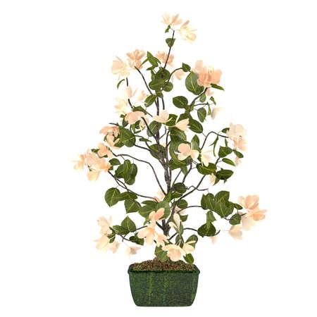 Flores en el bote en el fondo blanco photo