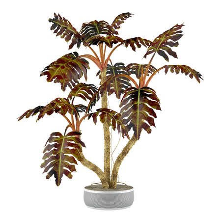 indoor garden: decorative plant palm in the pot at the white background Stock Photo