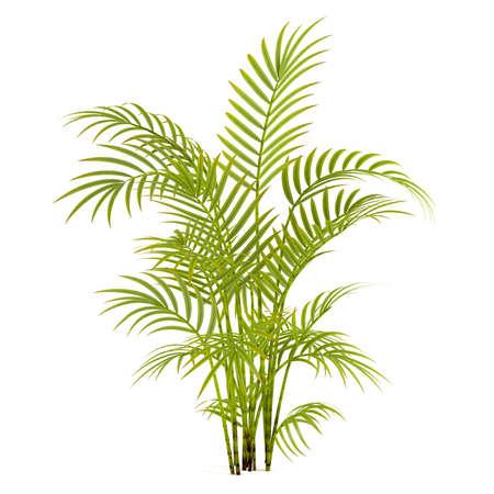 Palm plant tree at the white background Reklamní fotografie