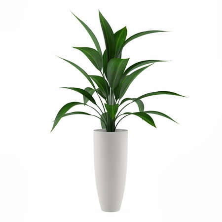 plant pot: plant isolated in the pot at the white background