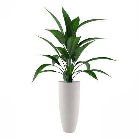 plante: plantes isolées dans le pot à l'arrière-plan blanc