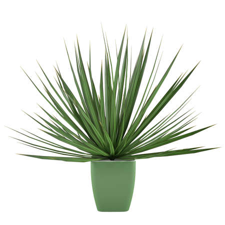 Plant bush isolated in the pot at the white background Banco de Imagens - 24836090