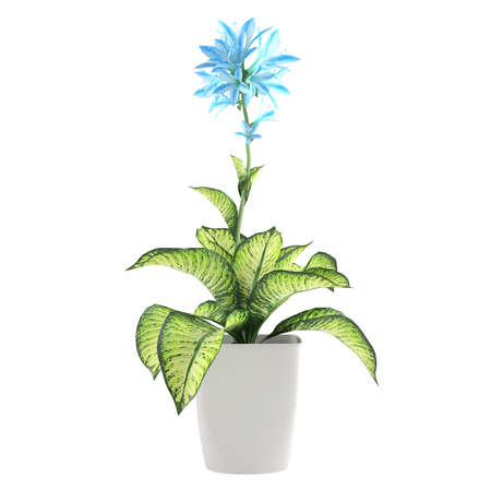 flower plant in the pot at the white background photo