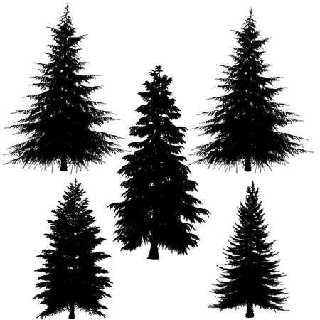 fir branch: fir-tree silhouette at the white background