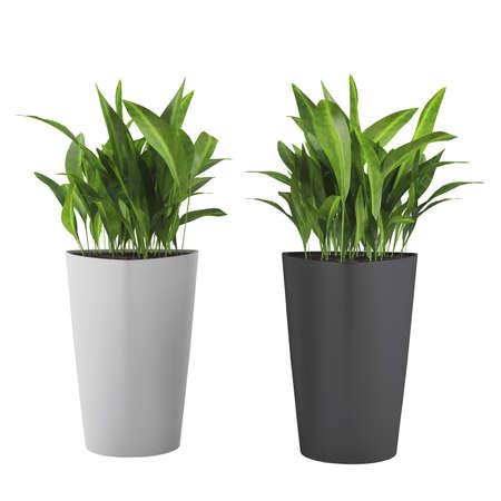 Decorative grass plant in flowerpot Banco de Imagens - 25079742
