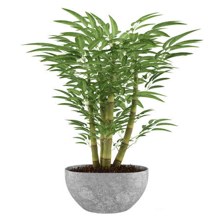 Bamboo exotic bush pot photo