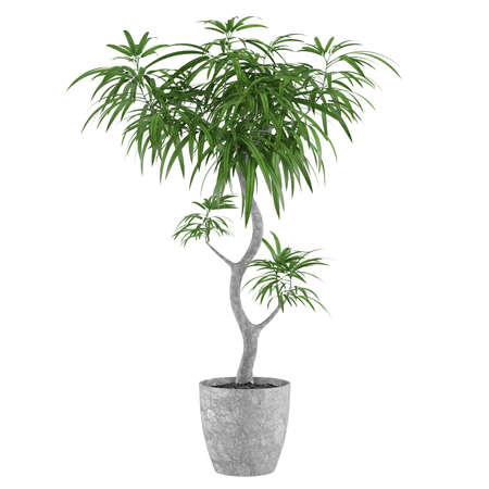 plant pot: Decorative pot plant palm