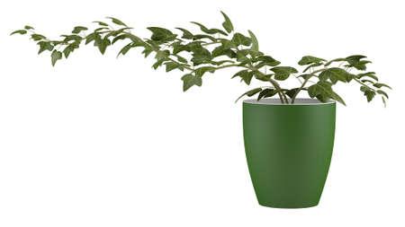 Ivy in a flowerpot Banco de Imagens