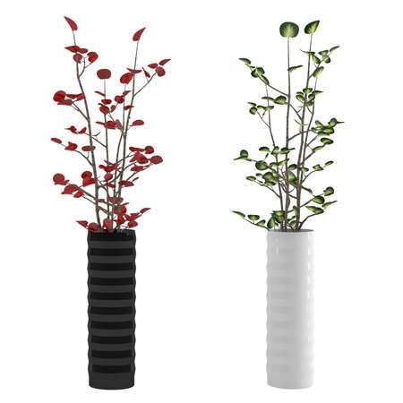 flower vase: Vase with Flower plant isolated