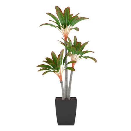 Decorative pot plant palm photo