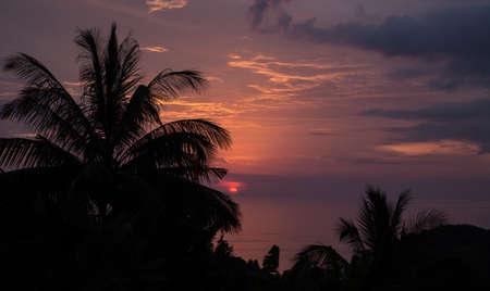 Exotic palmtrees silhouette on sunrise in tropic ocean.