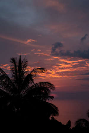 faraway: Exotic palmtrees silhouette on sunrise in tropic ocean.