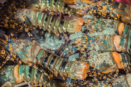 fishy: Spiny Lobster, shrimp fresh seafood market Thailand.
