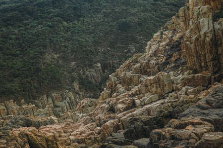 Evergreen forest beyond mountain stone creek