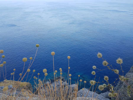 Plants growing on stones rocks against tranquil blue sky in wonderful nature.