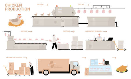 Chicken production process stages vector illustration. Cartoon automated processing factory line with workers and conveyor machines producing, sorting, packaging farm chicken poultry meat products