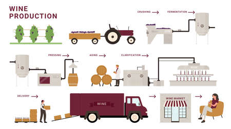 Wine production process stages infographic vector illustration. Cartoon modern winery factory line processing grapes, crushing, fermentation and aging, delivery to customer tasting alcohol beverage 矢量图片