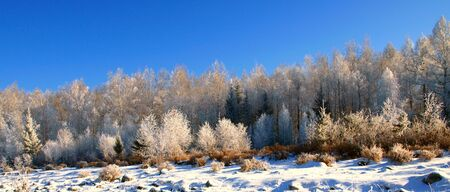 Winter landscape with snow trees in mountains  photo