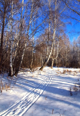 Winter landscape with traces of sledge and snow trees.  photo