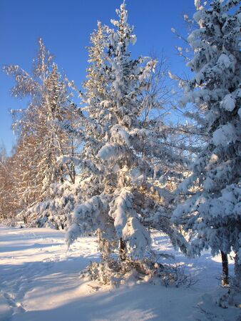 Winter landscape with snow trees.  photo