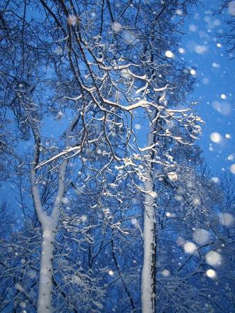 Schneefall mit Bäumen am Abend im Winter